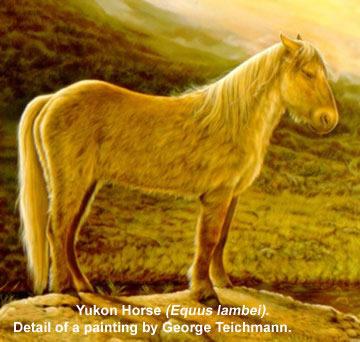 2014 Yukon Denali >> Ice Age Horse - Kantishna Wilderness Trails