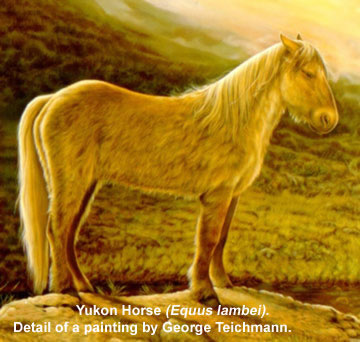 Ice Age Horse - Kantishna Wilderness Trails