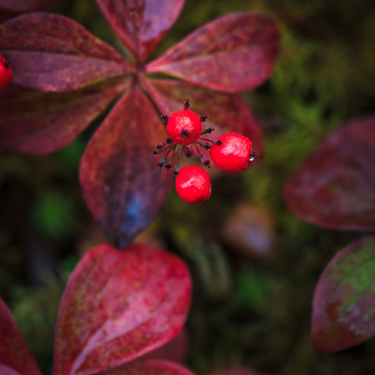 Flora & Berries